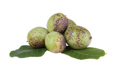 Green unripe walnuts Stock Photos
