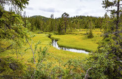 Green and untouched forest in the high moutains of Norway Royalty Free Stock Photo