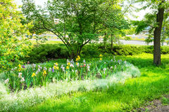 Green urban park Royalty Free Stock Photo