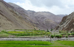 Green valley at Aichi, Leh, India Royalty Free Stock Photography