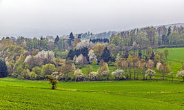 Green valley with blooming trees Royalty Free Stock Photos