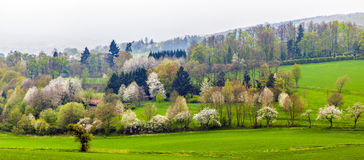 Green valley with blooming trees Royalty Free Stock Photo