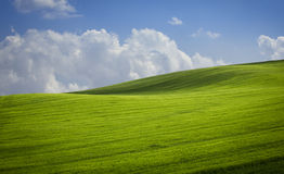 Green valley. Stock Photography