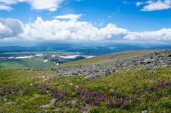 Green valley high on the mountains with the view to clear sky in summer day is spangled with blooming flowers. Summer landscape, Altai Mountains Stock Images