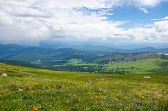 Green valley high on the mountains with the view to clear sky in summer day is spangled with blooming flowers. Summer landscape, Altai Mountains Stock Image