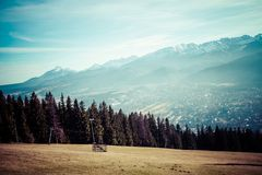 Green valley in the high Tatra mountains in Zakopane, Poland. Royalty Free Stock Image