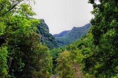 Green valley on La Palma island stock photos