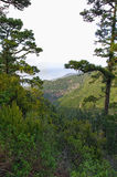Green valley on La Palma island Royalty Free Stock Photos