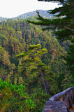 Green valley on La Palma island Stock Photography