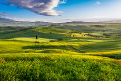 Green valley and mountains at sunset in Tuscany stock images