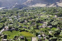 The green valley with poplar tree and houses in Leh Royalty Free Stock Photography