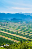 Green valley with rich crops. Panoramic view of the green valley with rich variety of crops with blue hills and sky in the background Royalty Free Stock Images