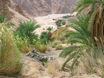 Green valley on Sinai. Stock Photo