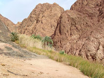 Green valley on Sinai. Stock Image