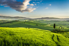Green valley at sunset in Tuscany royalty free stock photo