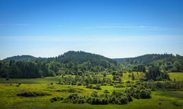 Green valley among the woods Royalty Free Stock Photography