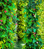 Green various creeper fern and lush plant on wall. Stock Images