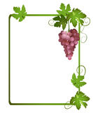 Green vector frame with a bunch of grapes Stock Photography