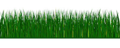 Green vector grass. Vector green grass on white background Stock Images