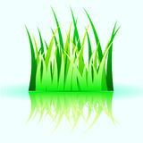 Green vector grass Stock Photos