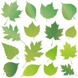 Green vector leaf Stock Photos