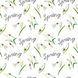 Green, vector, spring, nature, flower, illustration, snowdrop, b Stock Images