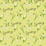 Green, vector, spring, nature, flower, illustration, snowdrop, b Stock Photography