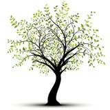 Green vector tree, white background stock illustration