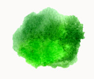 Green vector watercolor hand drawn stain isolated on white background for you eco design Stock Images