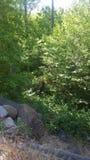 The green veg. Plants trees rocks Royalty Free Stock Image