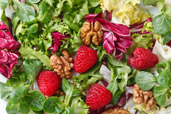 Green vegan salad with raspberry and nuts Royalty Free Stock Image