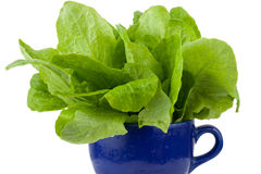 Green vegetable Royalty Free Stock Images