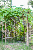 Green vegetable arch with bamboo Royalty Free Stock Photos