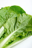 Green vegetable close up Stock Photos