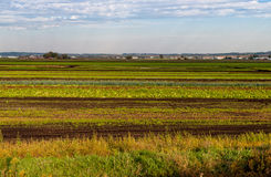 Green vegetable fields Royalty Free Stock Images