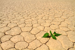 Green vegetable growing on cracked desert ground Stock Images
