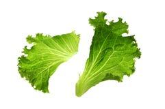 Green vegetable leave Stock Photo