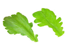 Green vegetable leave. On white Stock Photography