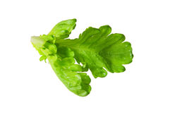 Green vegetable leave Stock Photo
