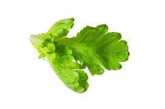 Green vegetable leave. On white Stock Photo