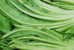 Green Vegetable Leaves stock images
