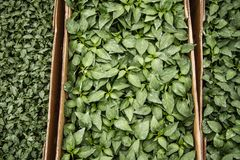 Green Vegetable Leaves Stock Photo