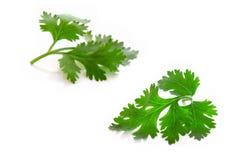 Green vegetable  leaves on white background. Parsley leaves on white background Stock Image