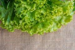 Green Vegetable. Green lettuce under sackcloth background Stock Photos