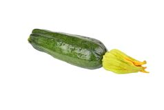 Green vegetable marrow (zucchini). Isolated on white background Stock Photo