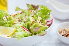 Green vegetable salad with sprouts. Beetroot and hummus. Healthy detox vegan food concept Stock Images
