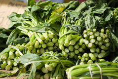 Green Vegetables. Sold at open market Stock Images