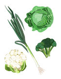 Green Vegetables. Clip-arts of green vegetables Royalty Free Stock Image