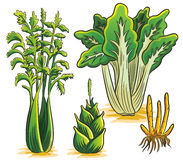 Green Vegetables Collection Stock Photo
