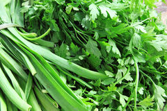 Green vegetables dill and parsley Stock Photography